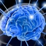cervello-sociale